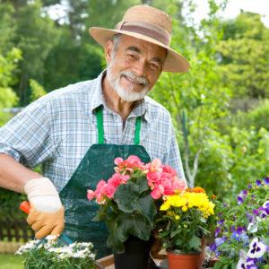 Concimi e ammendanti solidi per giardino