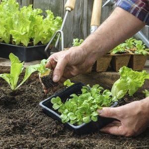 Concimi e ammendanti solidi per orto