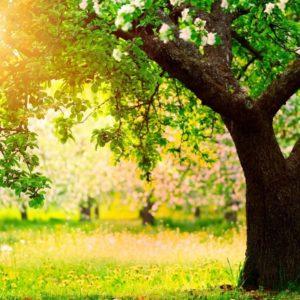 Prodotti speciali, induttori di resistenza e corroboranti per giardino