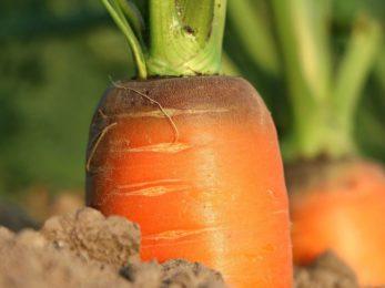 carrot-1565597_1920-compressor